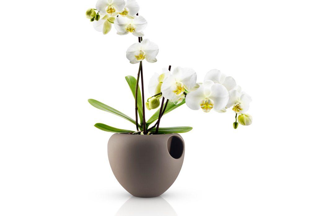 Un vaso moderno per arredare con le orchidee arredare for Accessori per la casa design
