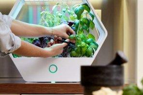 Serra idroponica indoor: coltivare ortaggi e spezie in casa non è mai stato così chic!