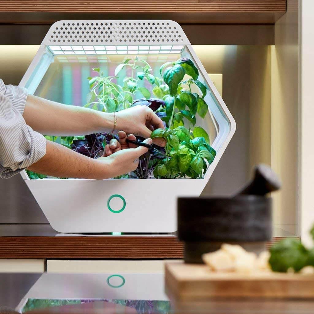 Coltivare In Casa Piante Aromatiche serra idroponica indoor: coltivare ortaggi e spezie in casa